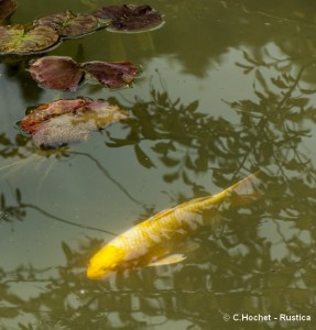 proteger-plantes-poissons-bassin-hiver