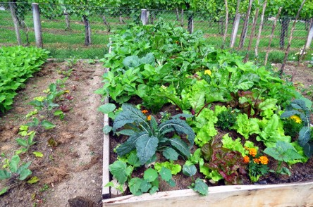 jardin-potager-permaculture